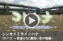 shinsaimirainohana_kansai